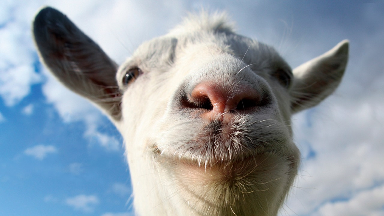 Baws Goat